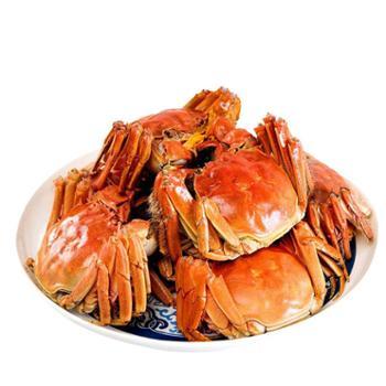 【景明】黄河口大闸蟹 鲜活肥美上市 3.5-3.7两公蟹 2.5-2.7两母蟹8只