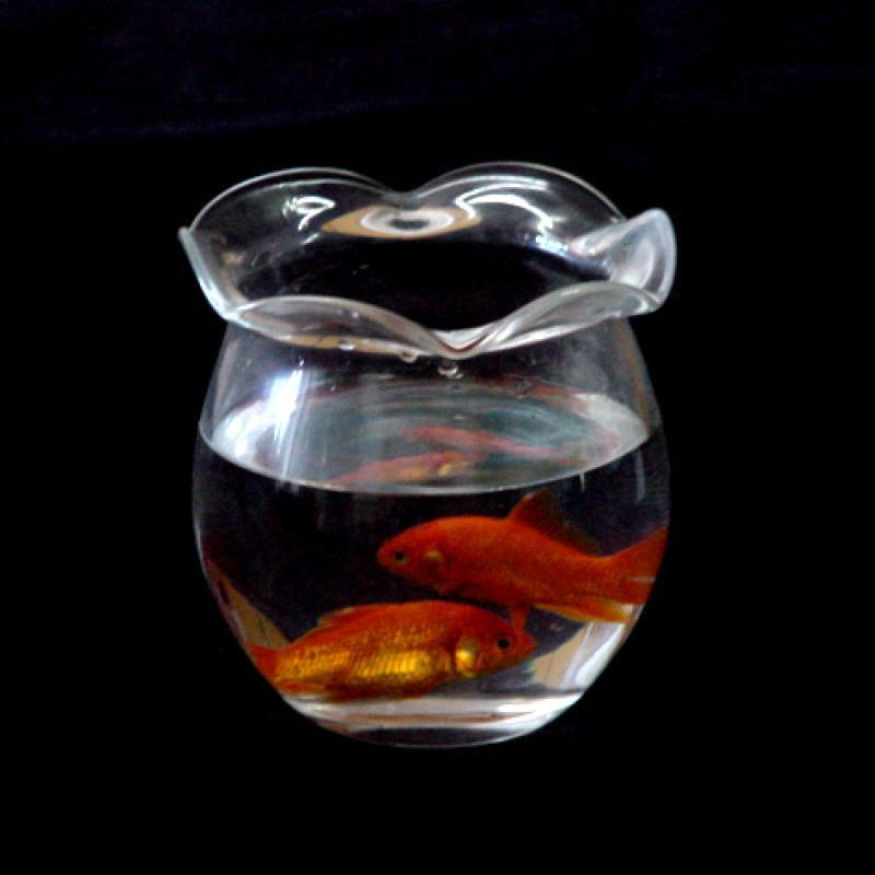 矿泉水瓶子手工制作鱼缸