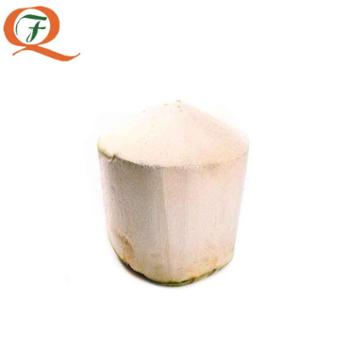 泰国椰青2个约1800g-2200g