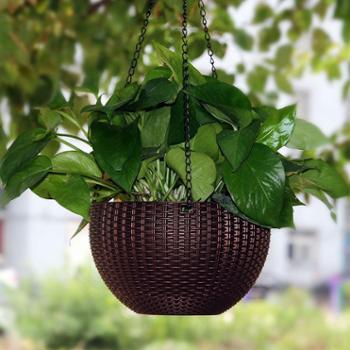Hodo红豆 绿萝常春藤室内绿植物盆栽四季常青创意微景观花卉苗 带盆组好发货