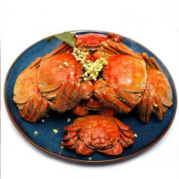 水中之霸大闸蟹纯母蟹2.7-2.2两8只(送3两公蟹4只)