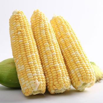 云南水果玉米带箱5斤新鲜应季甜玉米棒生吃