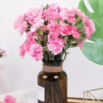 臻享单头康乃馨|颜色随机丨赠送花瓶丨10支单束