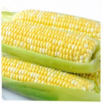 苏合秾园云南水果玉米2.5kg装/箱