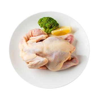 稻谷泉 土鸡小公鸡 散养农家童子鸡放养土鸡走地鸡新鲜