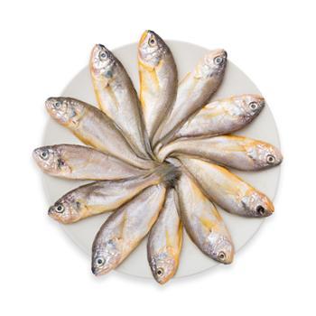 摩时渔鱼舟山鲜冻小黄鱼3斤装(约10-12条/斤)