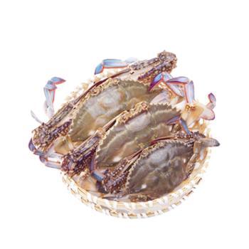 东海渔嫂舟山海鲜特产超低温液氮速冻梭子蟹200-300/只总重1400-1500g
