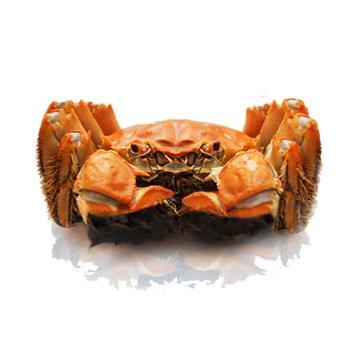 明澄牌大闸蟹活蟹礼盒公蟹3.5两*5只母蟹2.5两*5只