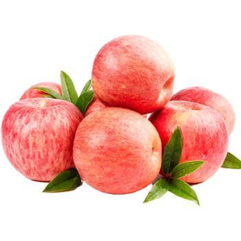 樵歌 栖霞红富士苹果 (果径75-85mm) 5斤/件